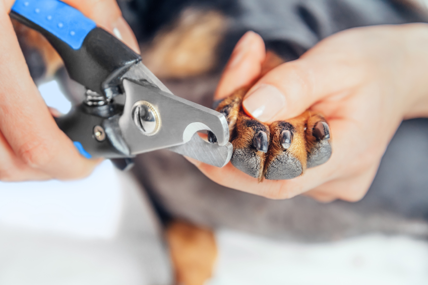 How to Use Dog Nail Clippers   Blain's